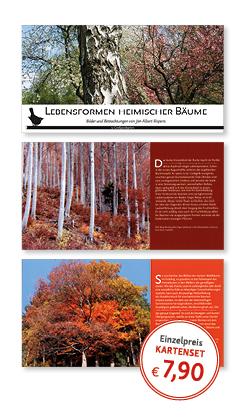 Postkartenset Bäume