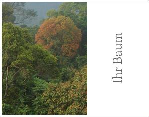 Aboprämie Info3: Baum. © Info3 Verlag